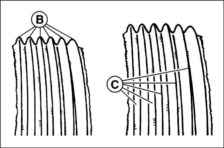 проверка состояния приводных ребристых ремней audi a3